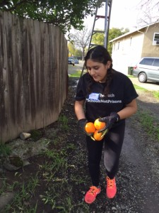 Brenda harvesting fruit with Harvest Sacramento where she met Megan Walsh, SSP's Director of Programs.